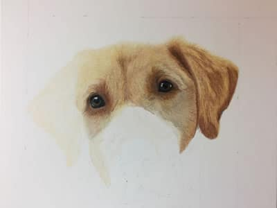 Yellow Lab Sketch